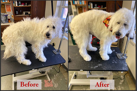 Grooming Before & After
